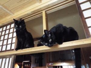 今年生まれた二匹の子猫、モフモフとジュニア
