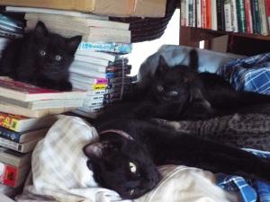 これは、ジュニアとその子供たち。キジ2と黒2づつ。