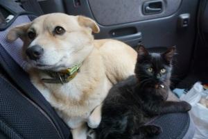 ベルコと黒猫モコ
